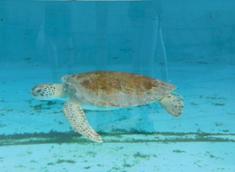 Plastic Pollution in the Ocean and How it Affects Wildlife